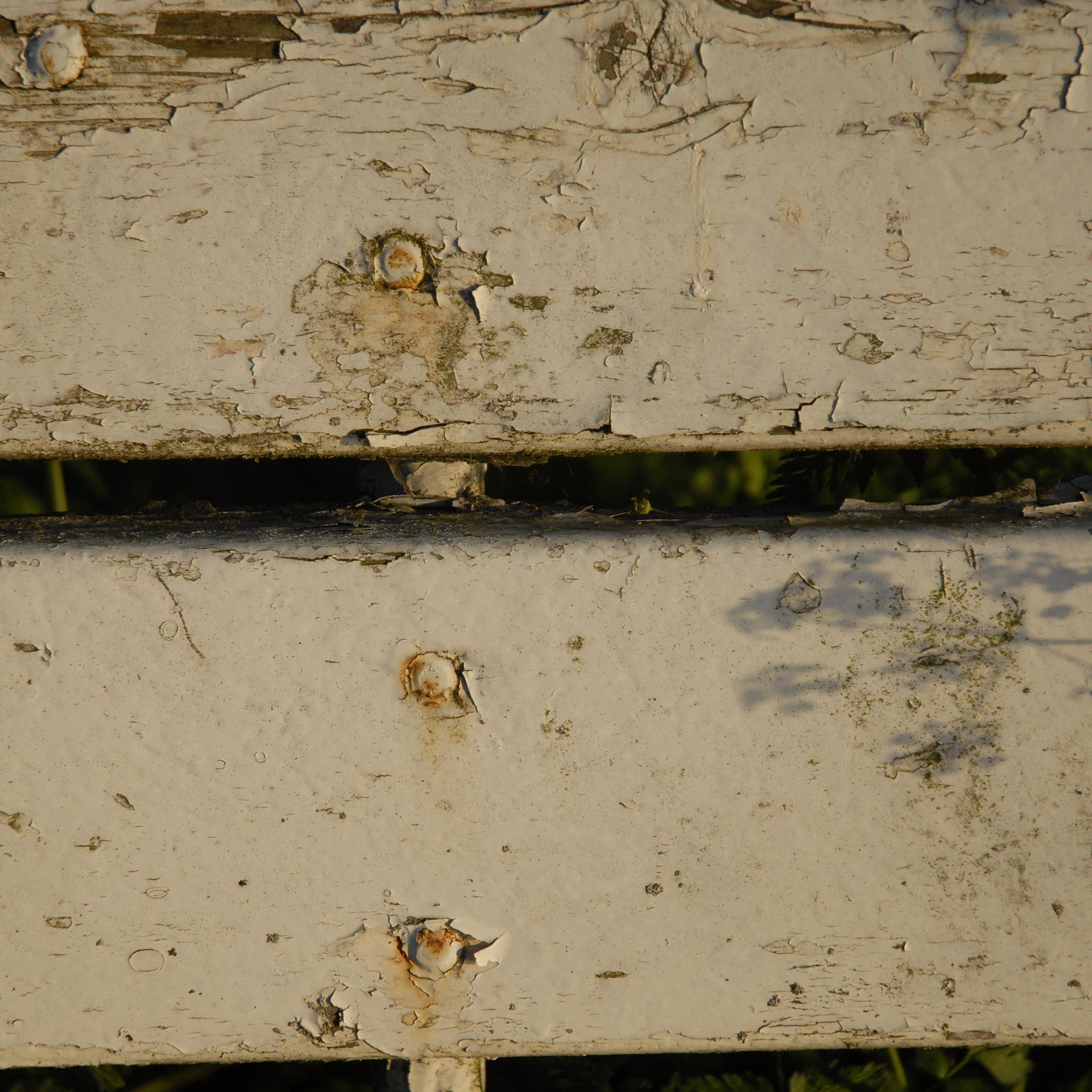 Teichplumps und Katzenschreck