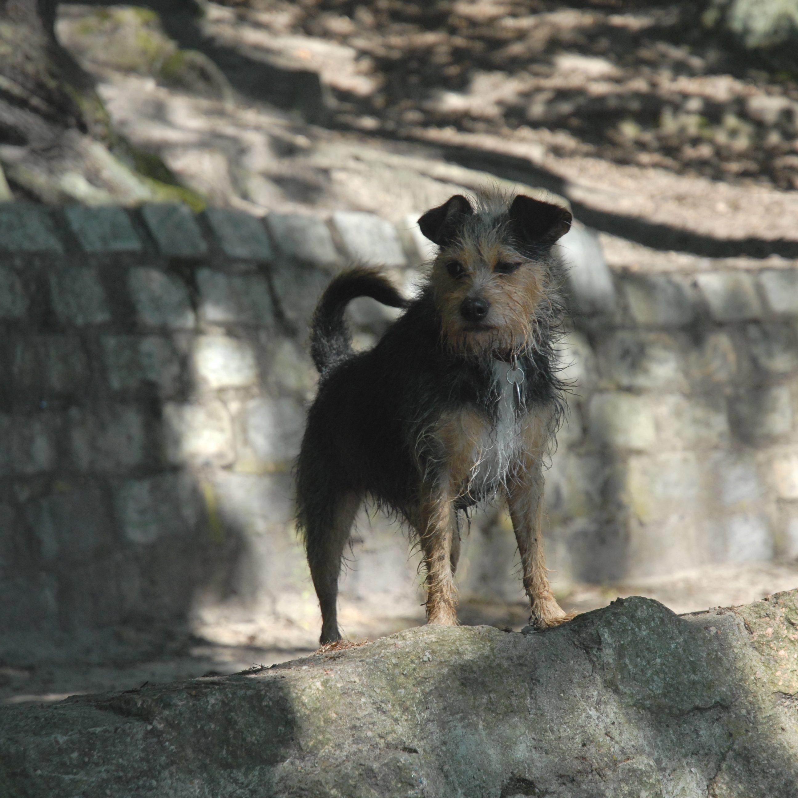 Hunderettung unterm Stein